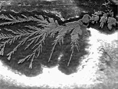 micrograph of copper dendrites