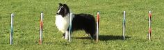 Teacup Dog Agility Equipment/ Regulation TDAA Equipment