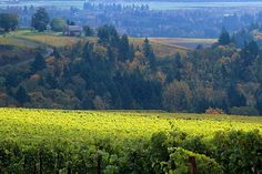 Willamette Valley Wineries Distance from Portland: 50 miles The Willamette Valley is home to some of the country's best Pinot Noir and Pinot Gris wineries. First, pad your stomach with some lunch at Red Hills Market before you set up camp at Penner-Ash Wine Cellars. You can sit outside and enjoy its amazing vista views with a few glasses of pinot. To continue the grape theme, stop by The Allison Inn & Spa