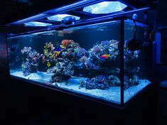 Saltwater Aquarium Decorations For Your Marine Tank Now for the enjoyable part-- saltwater fish tank designs are one element of marine fish keeping where you Coral Reef Aquarium, Aquarium Setup, Diy Aquarium, Aquarium Lighting, Aquarium Decorations, Planted Aquarium, Aquarium Ideas, Saltwater Aquarium Beginner, Saltwater Fish Tanks