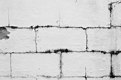 Wall black and white multiple sizes Florida by WinchesterRed, $18.00