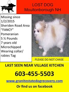 Granite State Dog Recovery Liked ·still missing 1/22    Missing 5 pound pomeranian in Moultonborough NH in the Sheridan Road area. Fancy is white and brown 7 years old and is microchipped she was involved in a car accident and was last seen near the Village Kitchen. Please Call her very worried family at 603-455-5503 with any information. Sharon Boulanger