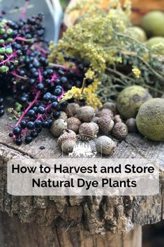 Fall is the perfect time to harvest natural dye plants and store for later use. While not all dye plants store well after being cut or gathered, quite a few How To Dye Fabric, Fabric Art, Dyeing Fabric, Natural Dye Fabric, Natural Dyeing, Plant Experiments, Just In Case, Harvest, Herbalism