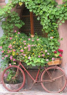 old red bike...climbing green ivy..-must remember not to throw our bike away.....Paint it