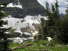 Goats in a beautiful place.