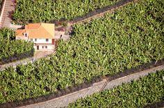 Allt om vinen från den gröna ön Madeira.