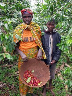 café picking Burundi