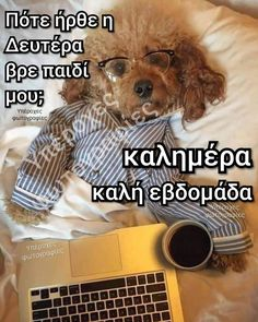 Greek Quotes, Teddy Bear, Animals, Happy, Decor, Animales, Decoration, Animaux, Teddy Bears