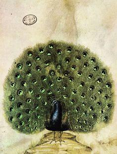 Giovannino de' Grassi's animal notebook. www.italianways.com/giovannino-de-grassi-and-his-animal-notebook/