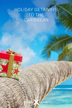 Looking for a last-minute getaway for the holidays? Book your cruise to the Caribbean for some family fun in the sun! Last Minute Getaways, Cruise Holidays, Celebrity Cruises, Caribbean Cruise, Free Time, Sun, Celebrities, Book, Celebs