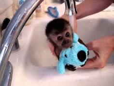 Baby monkey's first bath...OMG...this is SO adorable!!!