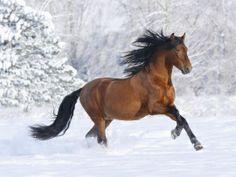 Horse in snow.