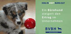 Infocard: Bürohund - Steigert den Ertrag