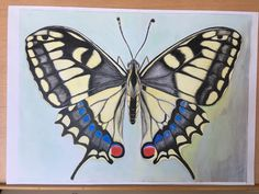 insect illustration, butterfly, swallowtail