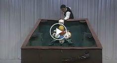 Homens Disfarçam-se e Comportam-se Como Bolas De Snooker Em Invulgar Programa Televisivo
