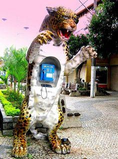 Orelhão de Onça Pintada em São  Lourenço, Minas Gerais