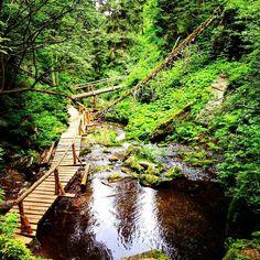 Naučná stezka kolem Bílé Opavy je plná lávek žebříků a nádherné přírody kolem. Doporučujeme jít od Karlovy Studánky k chatě Barborka. #czechrepublic #jeseniky #bilaopava #naucnastezka #vylet #hike #cestovani #cestujeme #travel #nature #priroda #wood #forest #voda #river #mountain #hory #ceskarepublika #travelphotography #instalike #instatravel #blogger #sbatuzkem Railroad Tracks, Instagram Posts