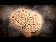 Joe Dispenza Desarrolla tu cerebro 03 Las neuronas y el Sistema Nervioso Central - YouTube