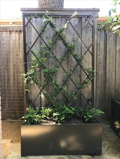 I like the mix of modern and classic approach to a vine trellis.