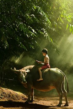 boy on a carabao