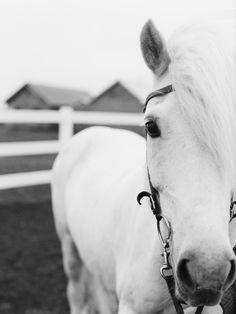 Horses, Posters and Prints at Art.com