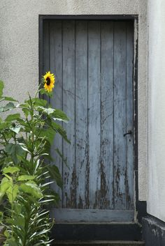 Sonnenblumentür