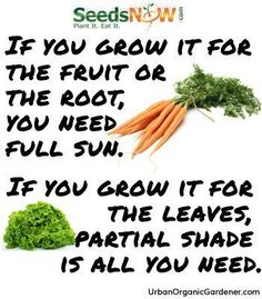 Great tip to know how much sun your veggies will need to grow properly!