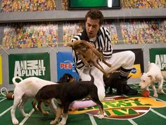 My dream job is being the ref for the Puppy Bowl