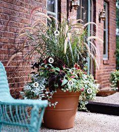 Full sun container garden.  A. Purple fountaingrass (Pennisetum setaceum 'Rubrum') -- 2 B. Coleus (Solenostemon 'Sun Velvet Red') -- 3 C. Plectranthus 'Variegatus' -- 2 D. Impatiens 'Dazzler Pink' -- 2 E. Licorice plant (Helichrysum petiolare) -- 2