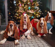 stinkin' around the christmas tree!