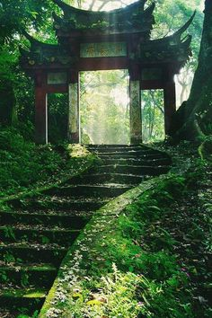 green, nature, and japan imageの画像