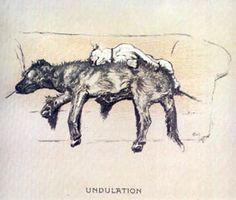 """""""Undulation"""" by Cecil Aldin"""