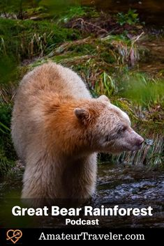 Travel to the Great Bear Rainforest, British Columbia (Podcast) #travel #british-columbia #canada #wildlife #boat #cruise Cruise Travel, Solo Travel, Travel Images, Canada Travel, British Columbia, Trip Planning, Travel Destinations, Wildlife, Boat