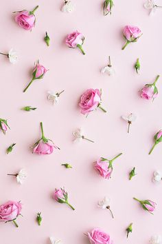 Rosebud and blossom background by Ruth Black - Blossom, Rose - Stocksy United Ps Wallpaper, Flower Wallpaper, Screen Wallpaper, Pattern Wallpaper, Wallpaper Backgrounds, Makeup Wallpapers, Cute Wallpapers, Flower Backgrounds, Photo Backgrounds