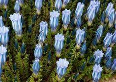 Flower array