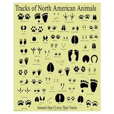 Books and this chart to ID animal tracks in the snow from Doodles and Jots.