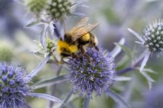We give advice on the best bee-friendly plants to grow, to provide them with pollen and nectar through the year, from the experts at gardenersworld.com