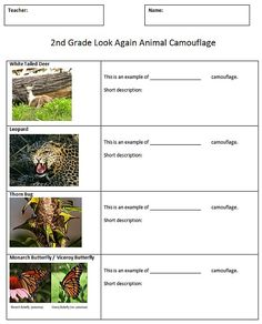 Camouflage handout