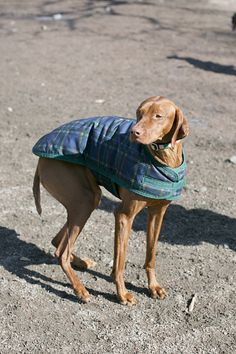 Street Style: Dogs in Coats