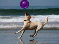 #juguetes #agua #perro #perros #dog #animales #pelotas #mascotas