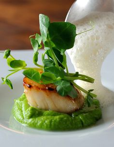 Scallops, pea purée, shoots and cumin foam.