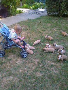 Ahhh!! it's a pit bull puppy swarm!