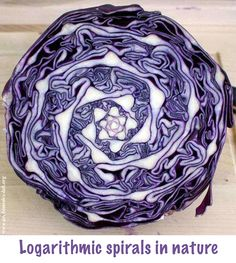 """The Golden Ratio and Secret Geometry in Nature totravelistoliveco: """" """"These wonderfully symmetrical plants show the fractal nature of math, physics and the universe. Could this be evidence of sacred. Fractals In Nature, Spirals In Nature, Art In Nature, Patterns In Nature, Textures Patterns, Nature Pattern, Satisfying Photos, Oddly Satisfying, Fibonacci Spiral"""