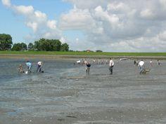 Oesters opruimen aan het strandje van Sint Philipsland.   Zeeland op foto