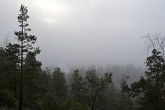 Lake Pitkäjärvi hidden by fog (Solvalla, Espoo, 20121104)