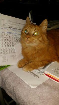 Don't mind me I'm a CATion!