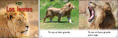 Los leones—by Claire Vial & Graham Meadows Series: Zoozoo en la Selva GR Level: C Genre: Spanish, Informational