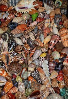 Love biodiversity