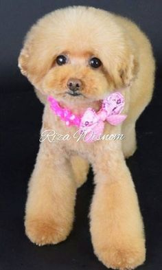 Wow! Dog Grooming Styles, Teddy Bear, Toys, Animals, Dog Haircuts, Animales, Animaux, Gaming, Animais