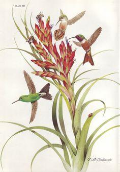 Hummingbird Illustration, Plant Illustration, Vintage Birds, Vintage Art, Audubon Birds, Bird Book, Plant Drawing, Flower Bird, Airbrush Art